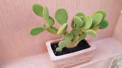 Cactus - 2