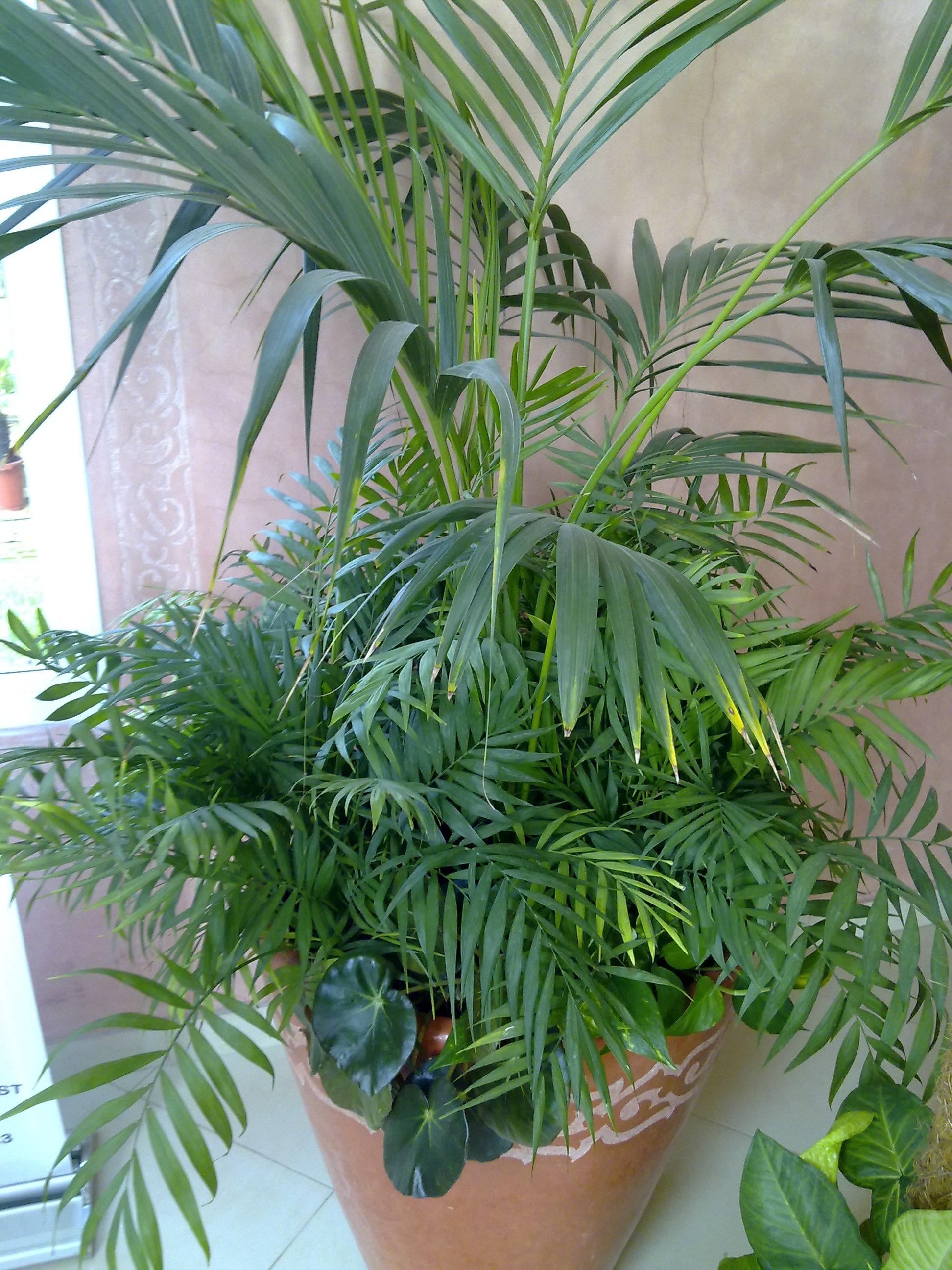 Plante  (71)