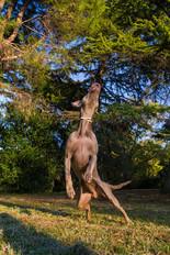 rolleston-dogs-park-pet-session.jpg
