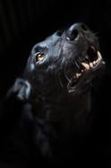 dog-portraits-canterbury-pet-photography.jpg