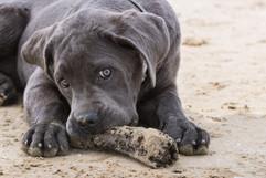 dogs-puppy-photography-portrait-sumner.jpg