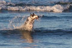 pets-photography-sumner-chch-dogs.jpg