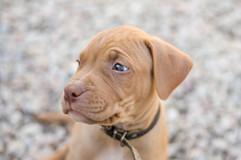 best-puppies-photography-professional-chch.jpg