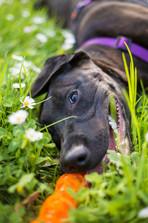 session-dog-pets-christchurch-cashmere-park.jpg