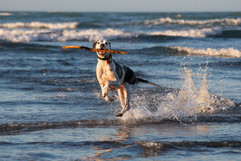Christchurch-dogs-photo-sumner-action.jpg