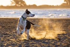 best-photographer-dog-sumner-christchurch.jpg