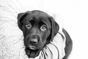 chch-pet-puppy-rescue-photography.jpg