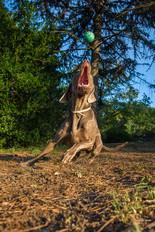 hound-photographer-pets-dogs-chch.jpg
