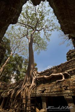www.emanueledelbufalo.com #asia #thailand #angkor_wat #temple #ta_prohm