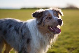 beautyful-dog-portraits-photos-christchurch.jpg