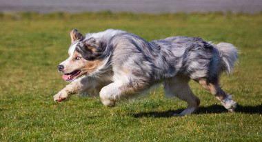action-photographer-pet-christchurch-dog.jpg
