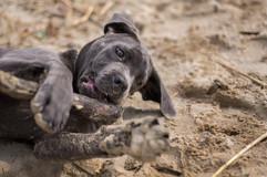 sumner-pet-photos-dogs-animal.jpg