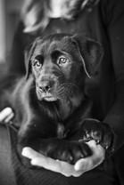 pets-dog-canine-photos-rolleston.jpg