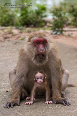 www.emanueledelbufalo.com #thailand #asia #chiang_rai #monkey_cave #animal #baby