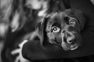 pet-christchurch-photographer-dogs-bw.jpg