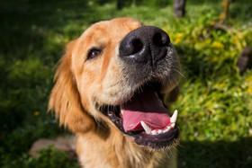 puppy-pet-golden-photography-canterbury.jpg