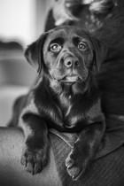professional-pet-nz-christchurch-dogs.jpg