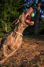 play-dog-park-christchurch-photographer.jpg