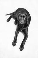 puppies-dog-photography-sumner-pet.jpg