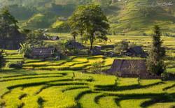 www.emanueledelbufalo.com #vietnam #sapa #village #rice_terrace #lao_chai