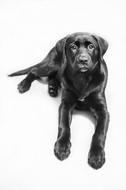 blackandwhite-photography-pet-animal-puppy.jpg
