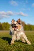 photographer-professional-animal-action-dogs.jpg
