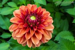 www.emanueledelbufalo.com #singapore #botanic_garden #flower