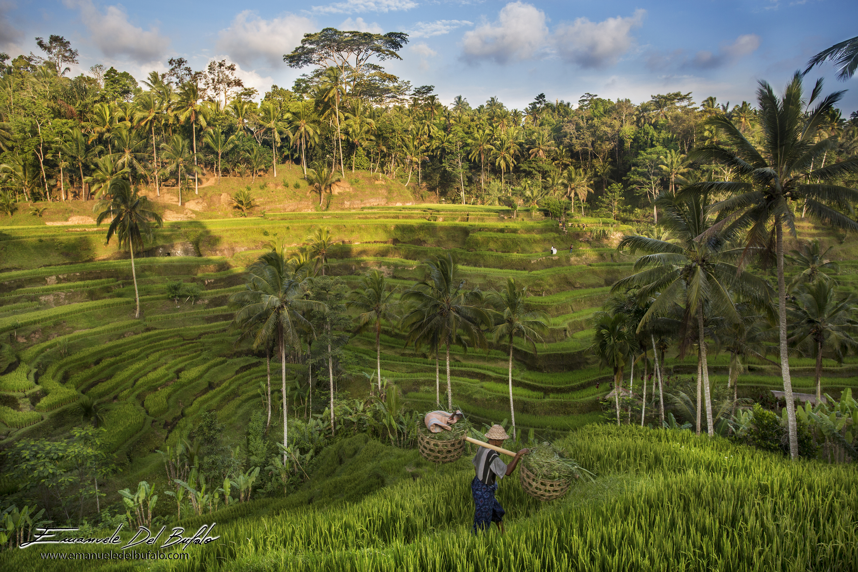 www.emanueledelbufalo.com #bali #indonesia #rice_field #terrace #green #sunset #man #landscape #UNES