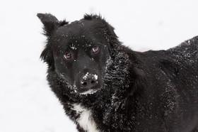 dogs-photographer-snow-canterbury-furry.jpg