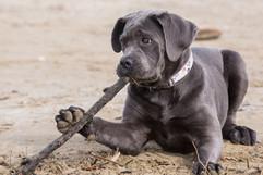pets-canterbury-photographer-dogs-funny.jpg