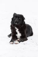 pet-rolleston-professional-dog-canine.jpg