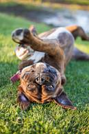 pet-photography-dog-christchurch-nz.jpg
