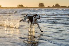pet-photography-sumner-beach-dog.jpg