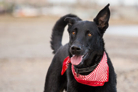 sumner-dog-shepherd-photographer-pet.jpg
