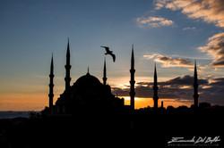 www.emanueledelbufalo.com #istanbul #turkey #blue_mosque #seagull #sunset #the long term traveler #r