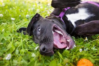 dogs-park-pet-photography-christchurch.jpg