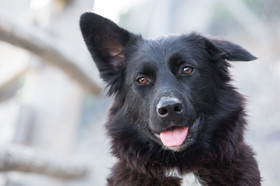 pets-photographer-christchurch-dog-portraits.jpg