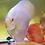 Thumbnail: Albino White Butterfly