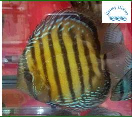 Golden Nhamunda