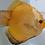 Thumbnail: Golden Snakeskin
