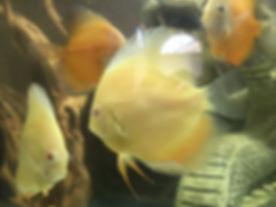 albino2.jpg