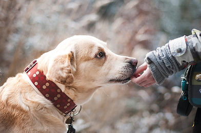 Fostering dogs improves adoption outcome