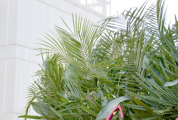Palm_Wall_6.jpg