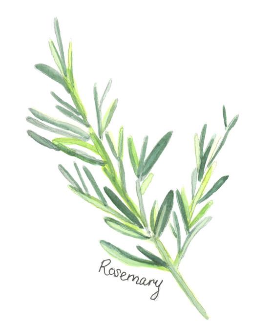 Rosemary Edit RGB.jpg