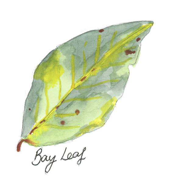 Bay Leaf Edit RGB.jpg