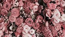 wall flower for hire