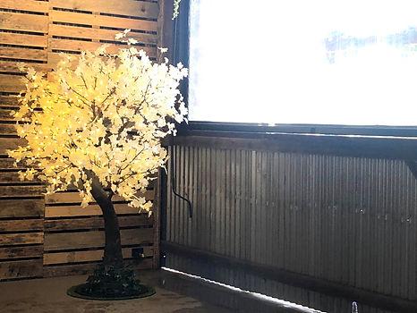 White Maple 1.8.jpg