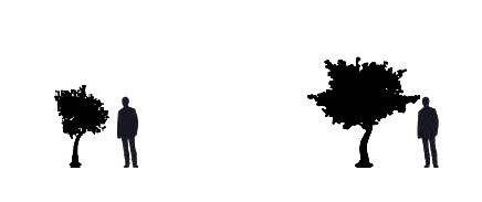 Tree sizes.JPG