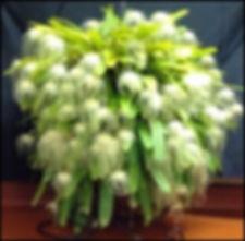 2019-10 AOS CCE - Bulbophyllum.jpg