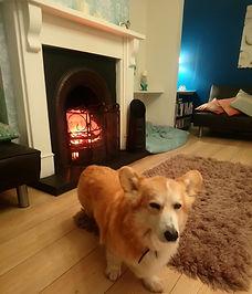 albert in front of the fire.jpg